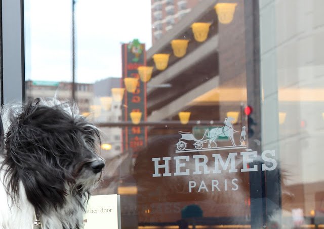 Shopping with dogs in chicago