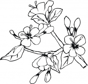 w coloring pages  pictures of flowers to