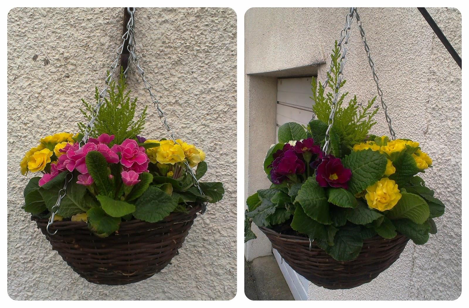 Whitehall Garden Centre Hanging Baskets