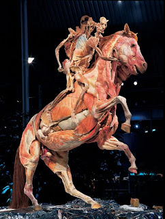 Body Worlds Controversies | RM.