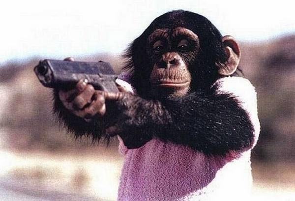 Saat monyet mengancam akan menembak pacarnya kalo selingkuh