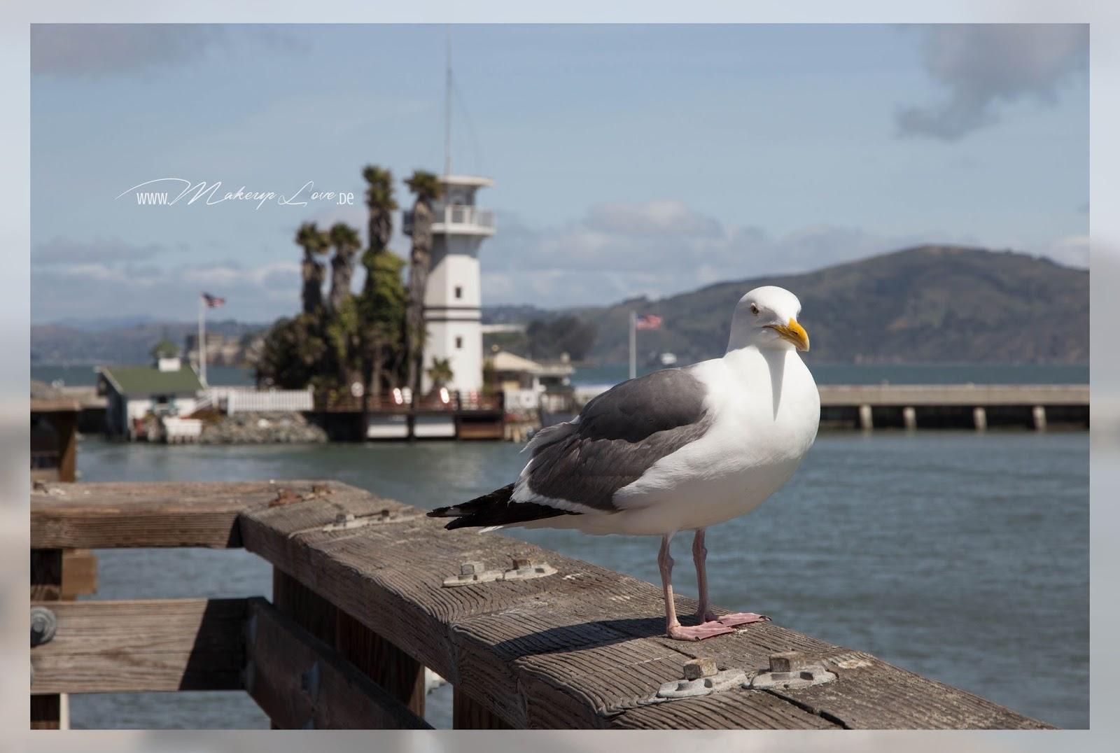 San Francisco Pier 39 Möwe
