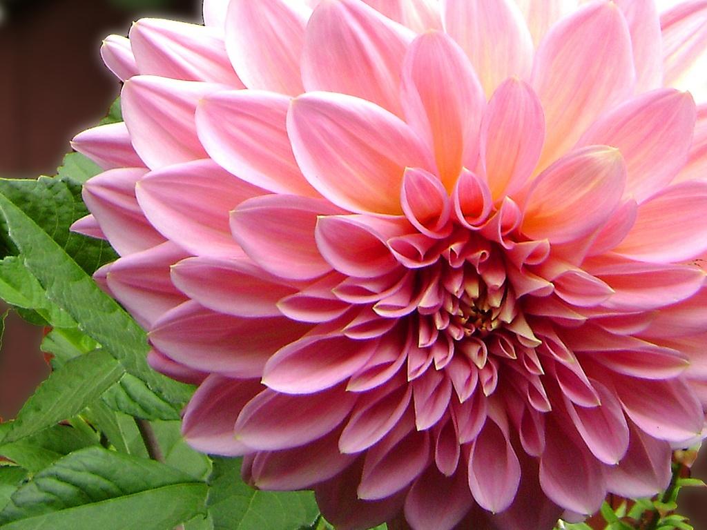 Im  Genes De Paisajes De Flores
