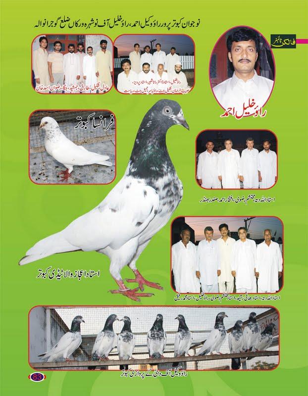 K Magazine Pigeon Pigeons Magazine ~ Kab...
