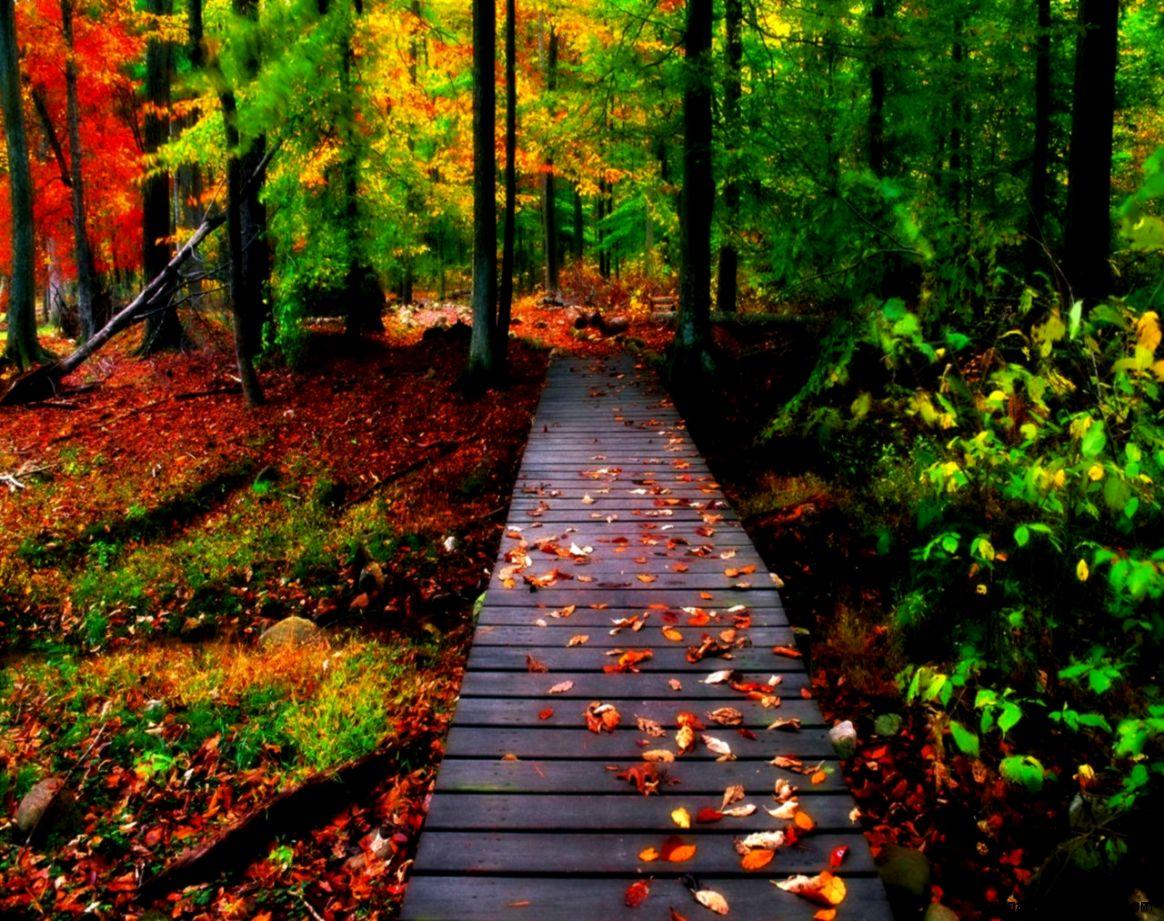 Autumn Road Background Wallpaper