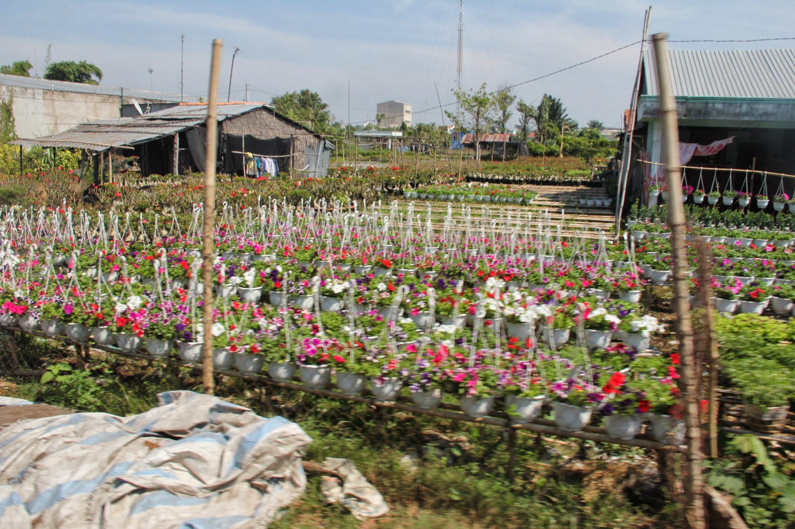 "Flowering plants ready for sale in Sa Dec City, the ""flower kingdom"" of the Mekong Delta."