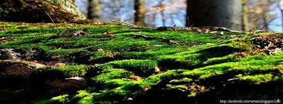couverture facebook forêt