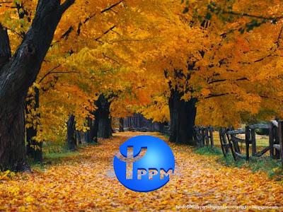 Wallpaper do Partido Popular Monárquico emblema inclinado do PPM para utilizar como fundo de tela do seu ambiente de trabalho Árvores no Outono