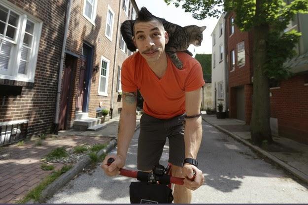 La gata que monta en bicicleta