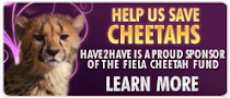 Help Us Save Cheetahs