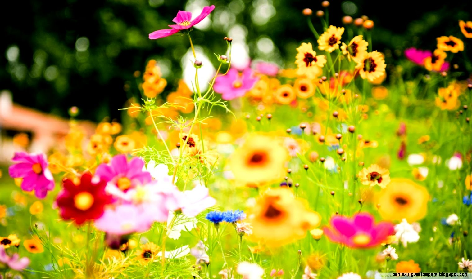 View Original Size Summertime Flowers Wallpaper 1600x1200 23614