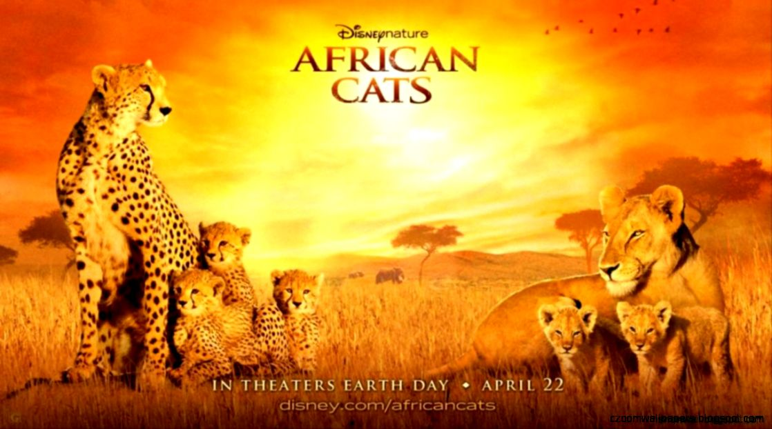 African Cats 2011 Hd Wallpapers  View Wallpapers