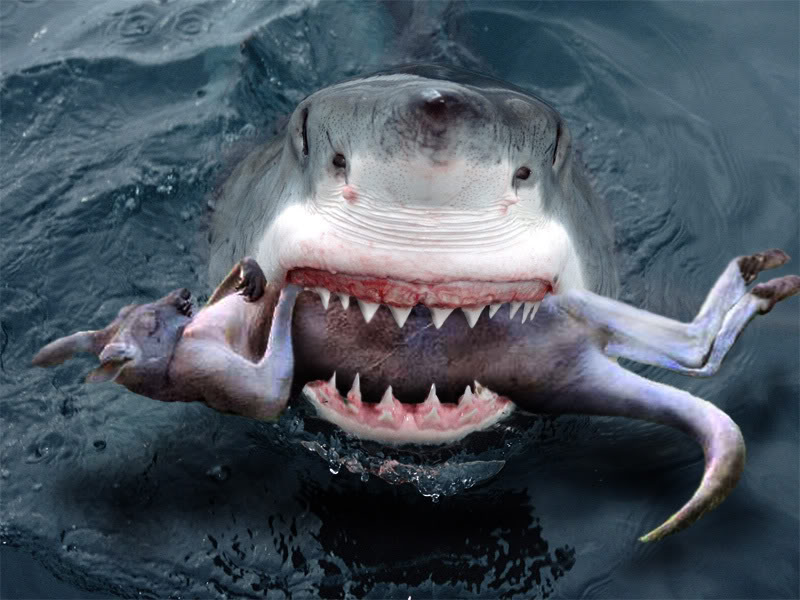 Octopus Attacking Human Shark attacks have killed only
