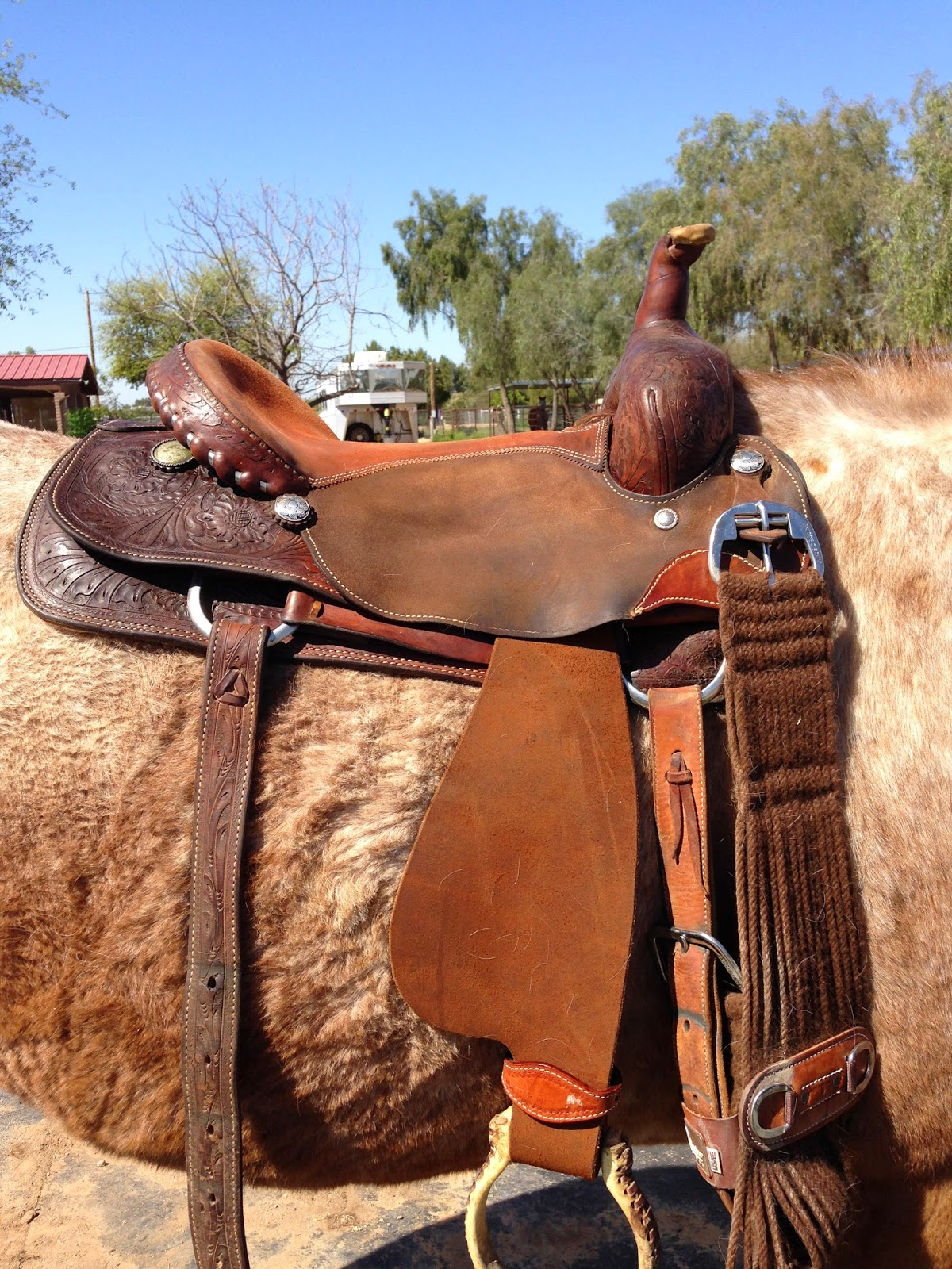 Just as I suspect it, it falls right down on top of their withers. However,  when I added the saddle pads.