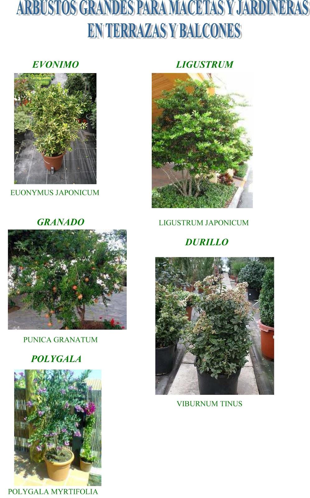 Jara jardiner a y paisajismo arbustos grandes para - Macetas de plastico grandes y baratas ...