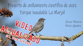 Proyecto de anillamiento científico de aves. Parque La Marjal.