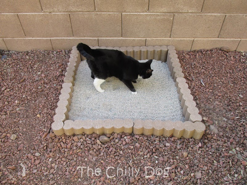 Tutorial outdoor cat litter box the chilly dog for Indoor gardening with cats