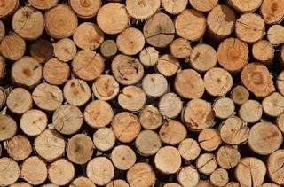Venta de pino, roble y haya