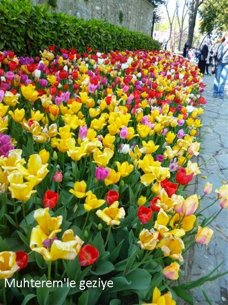 istanbul tulip time