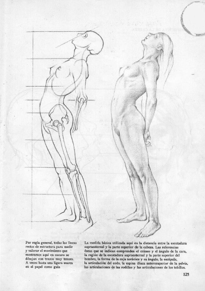 Human Figure Drawing Methods: Female Anatomy Figure Drawing Looking Up