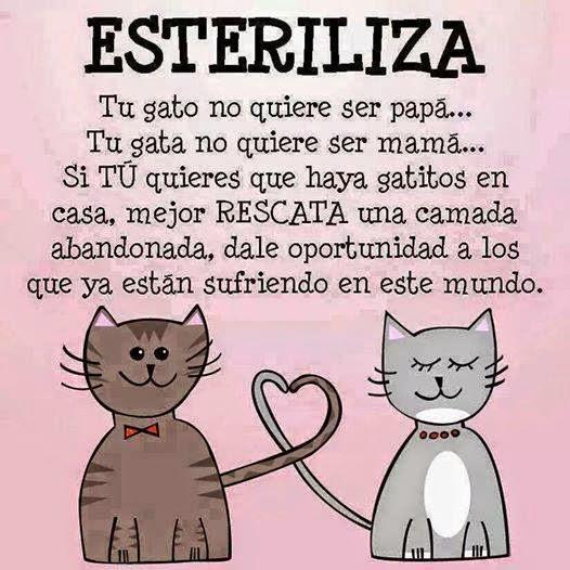 esteriliza a tu gato