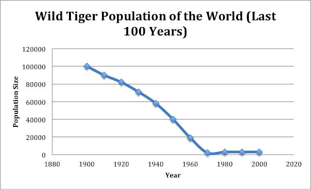 the endangerment of the white tiger species Known as the world's largest cat, the siberian or amur tiger is endangered found in mainly in eastern russia's forests, as well as north korea and china, the population dropped at an alarming rate from 1910 to 1940 only about 500 of these tigers are in captivity, and the number of wild siberian tigers is.