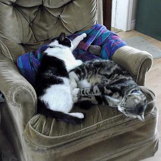 Winston and Molly nap