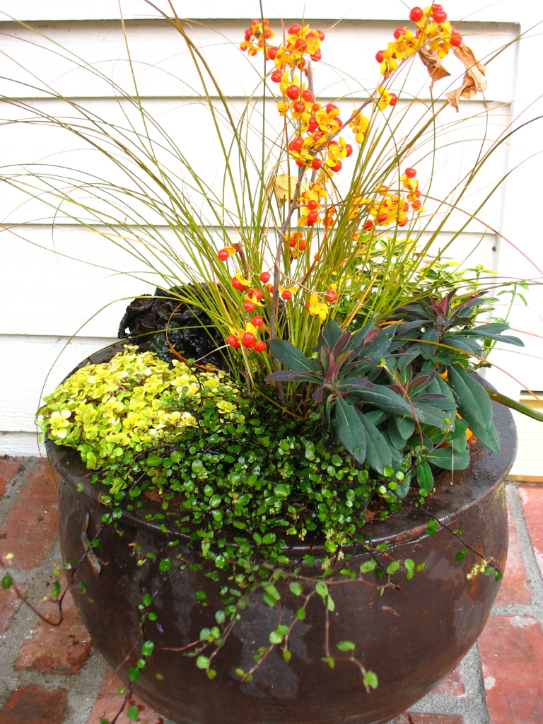 garden adventures for thumbs of all colors container gardens