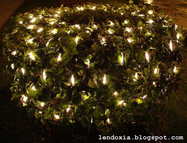 svijetleci grm