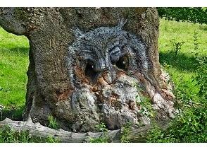 Pareidolia Batang Pohon Berbentuk Burung Hantu