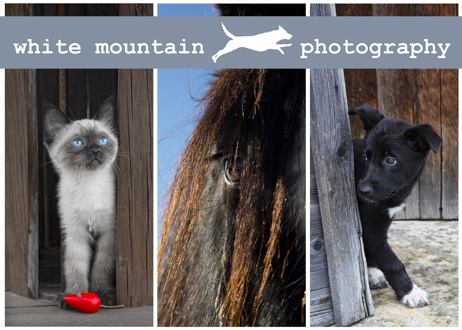 White Mountain Photography Pet