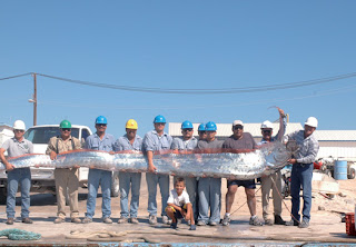 The Paranormalistics: Cryptid Creatures Oarfish 56 Ft