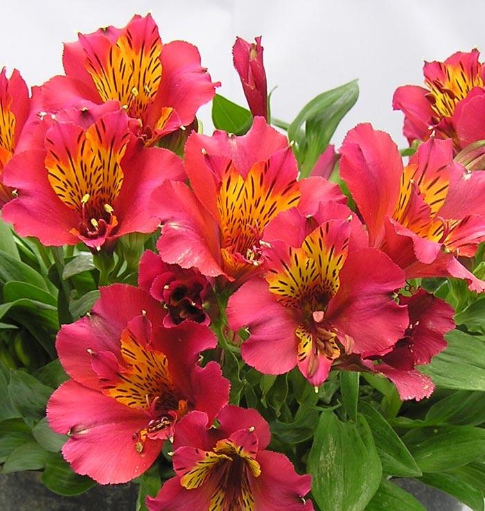 vriksha nursery february, Natural flower