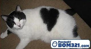 Simbol LOVE Pada Badan Kucing