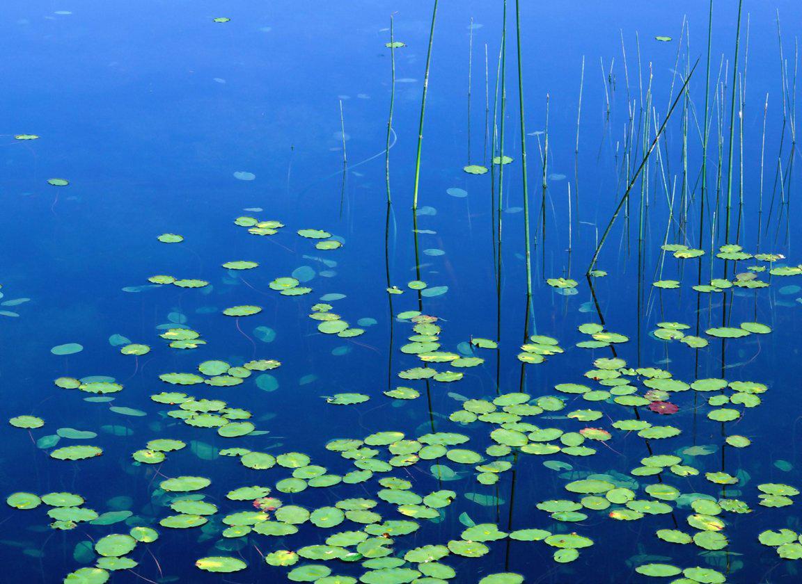 http://3.bp.blogspot.com/-1RLHOu_bxFw/T89obzhx-sI/AAAAAAAAD4k/CTFtE91f-xA/s1600/lake+wallpaper+%252811%2529.jpg