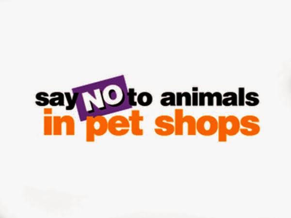 Ελληνικό Παρατηρητήριο Βιοποικιλότητας: Λέμε όχι στην πώληση ζώων μέσω pet shop.