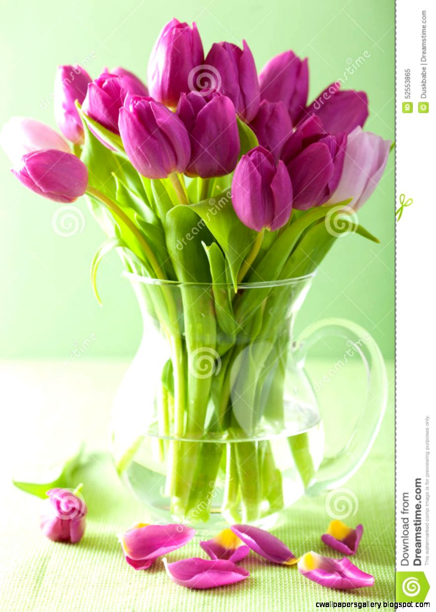Beautiful Purple Tulip Flowers Bouquet In Vase Stock Photo   Image