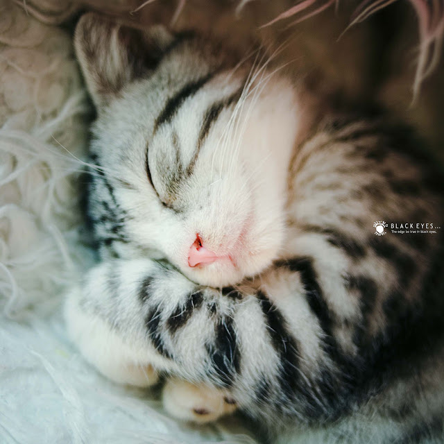 I am sleepy... by black_eyes from flickr (CC-NC-ND)