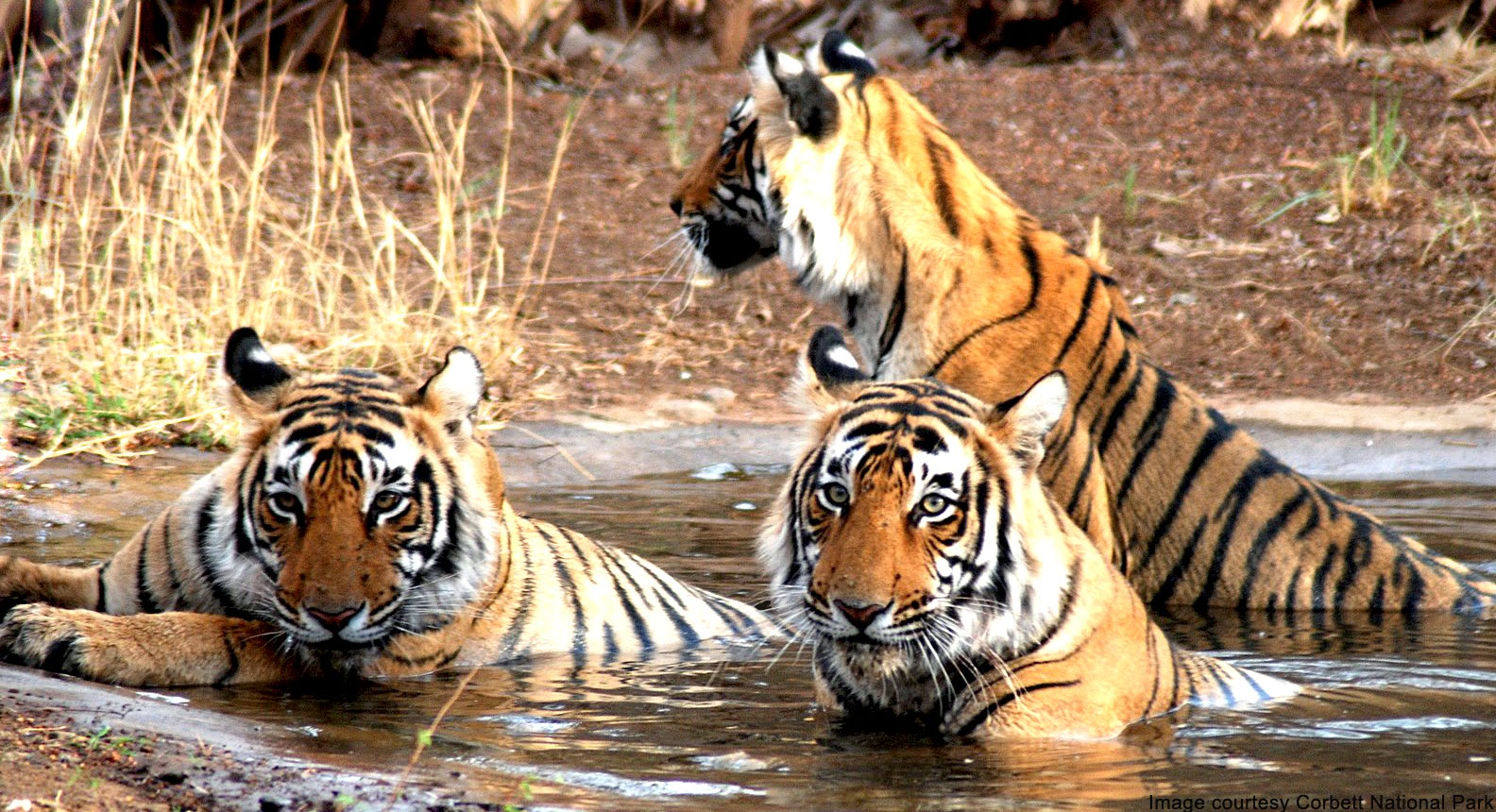 Corbett National Park wildlife