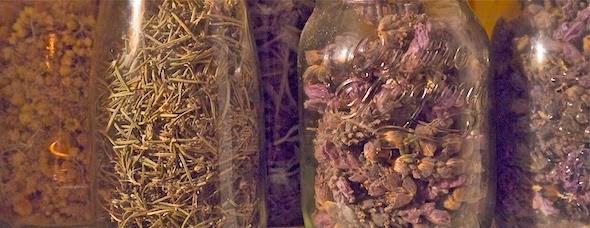 el-rovell-de-lou-eivissa-essencial-plantas