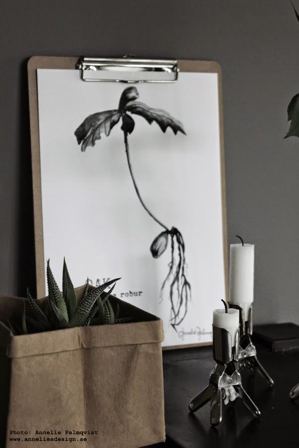 clipboard med konsttryck, artprint, artprints, konst, prints, med växter, oak, ekollon, tavlor med växter, svartvit tavla, poster, posters, papperspåse, papperspåsar i inredningen, påse för blomma, hårda påsar av papper, ljusstake, tavlorna, webbutik, inredning, interior butik, inredningsbutik, webshop, kaktus, kaktusar,  grått, svart och vitt, svartvita,