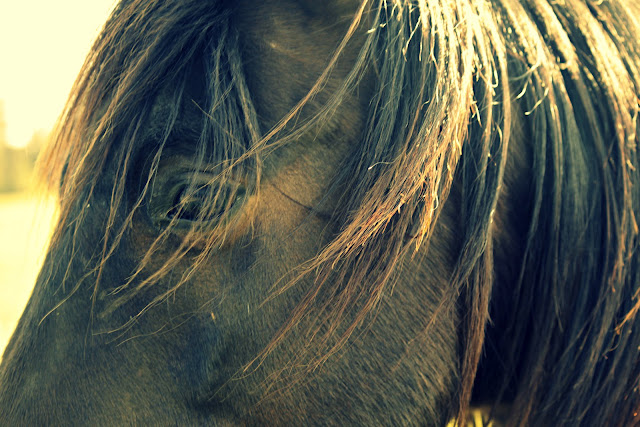 horse photography, horse, photo, picture, beach bum chix
