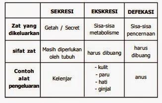 Sistem Pengeluaran (Ekskresi)