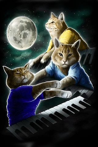 three keyboard cat moon funny iphone wallpapers 5s 5c 6