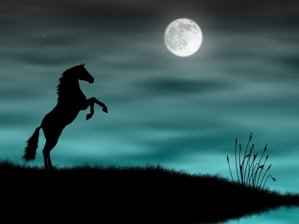 Wonderful   Wallpaper Horse Stunning - wild-horse-silhouette-in-a-blue-moonlight  Perfect Image Reference_813319.jpg