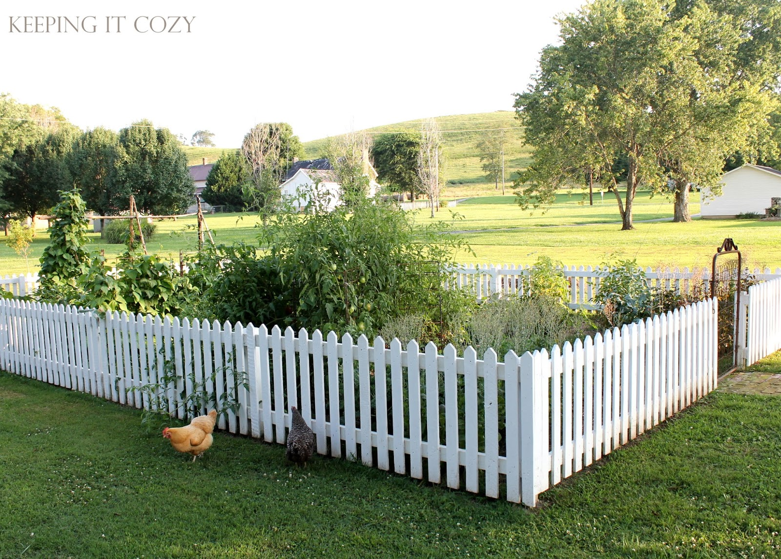 Our Fence Has Worked Wonderfully In Keeping The Chickens Out. In Fact, Not  One Hen Has Made It In Yet. (Plus It Helps My Garden Look Pretty From The  Road... ...