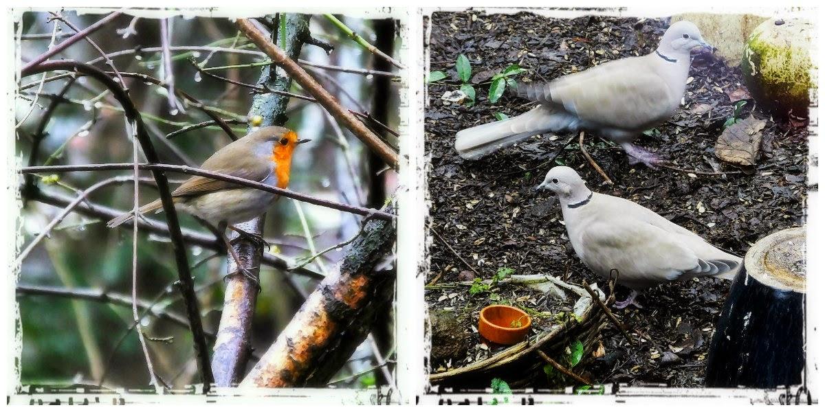 vogels vanuit de keuken © ludo rutten
