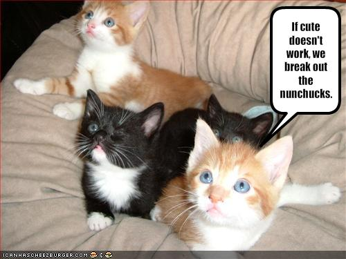 Funny Cute Kittens Photos