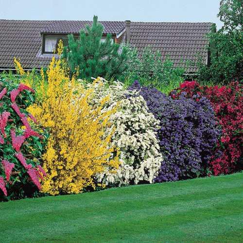 Gardening shady style alternatives to leyland cypress - Shrubbery for privacy ...