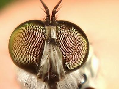 глаза мухи - тематическое занятие